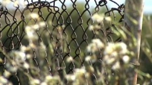 fence flowers 1